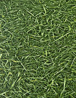 Sol vinyle BUBBLEGUM, motif herbe, rouleau 2 m
